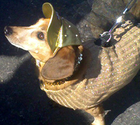 Barkus 2010 dog with gold cap