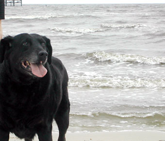 Molly at the Gulf of Mexico