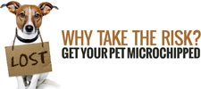 microchip your dogs